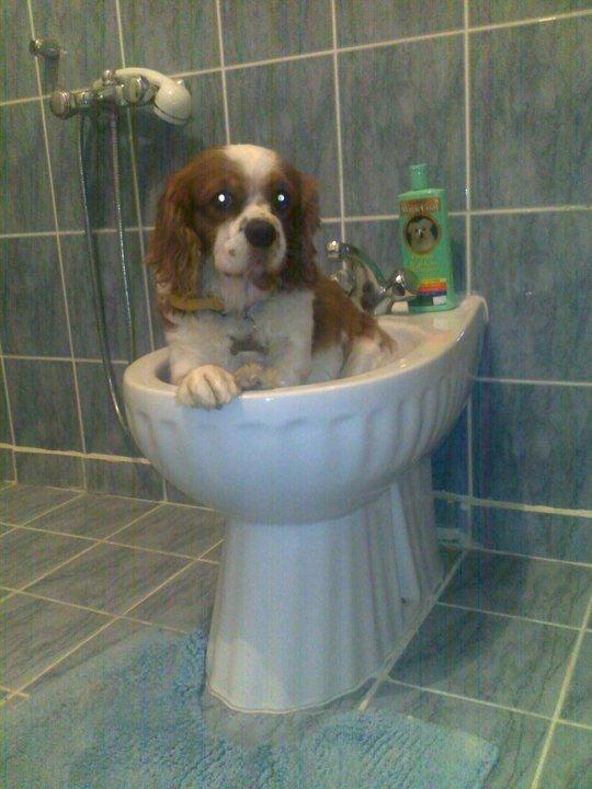 bıdık banyo.jpg