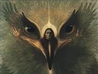 HawkStronger