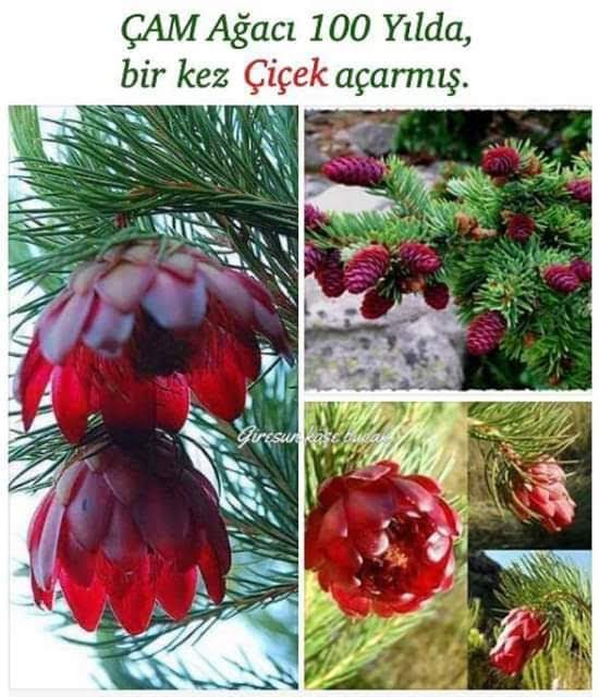 facebook_1550556269253.jpg